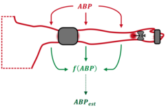 ABP measurements on the arm